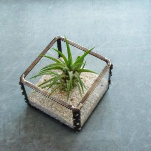 Air Plant Containers Awesome How to Care for Air Plants Plants