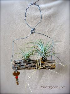 Air Plant Containers Beautiful Air Plant Projects From Scrap Materials Plants