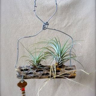 Air Plant Containers Elegant Air Plant Projects From Scrap Materials Plants