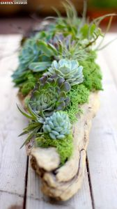 Air Plant Containers New 15 Best Air Plants Ideas for Amazing Home