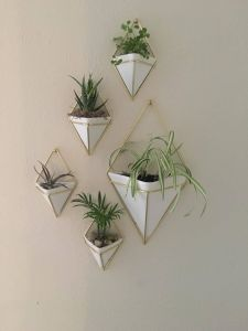 Air Plant Containers New Amazonsmile Umbra Trigg Hanging Container Small Set Of 2