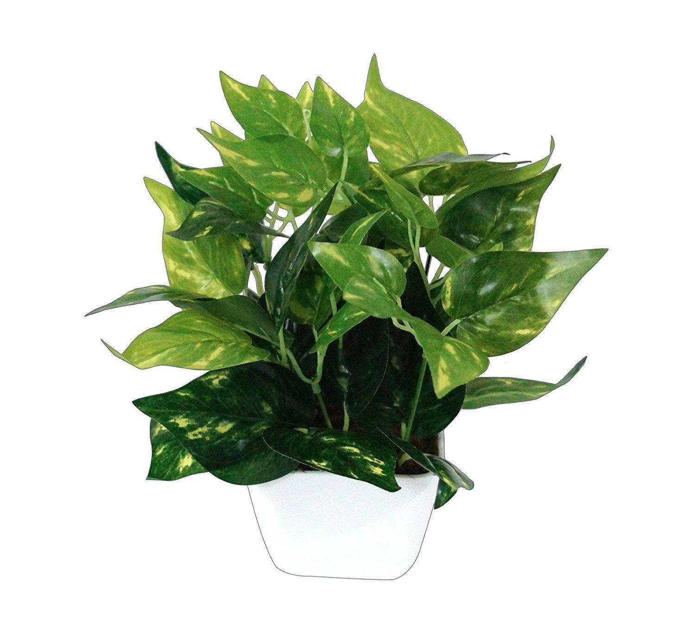 YUTIRITI Miniature Money Plant Green SDL 1 c3320