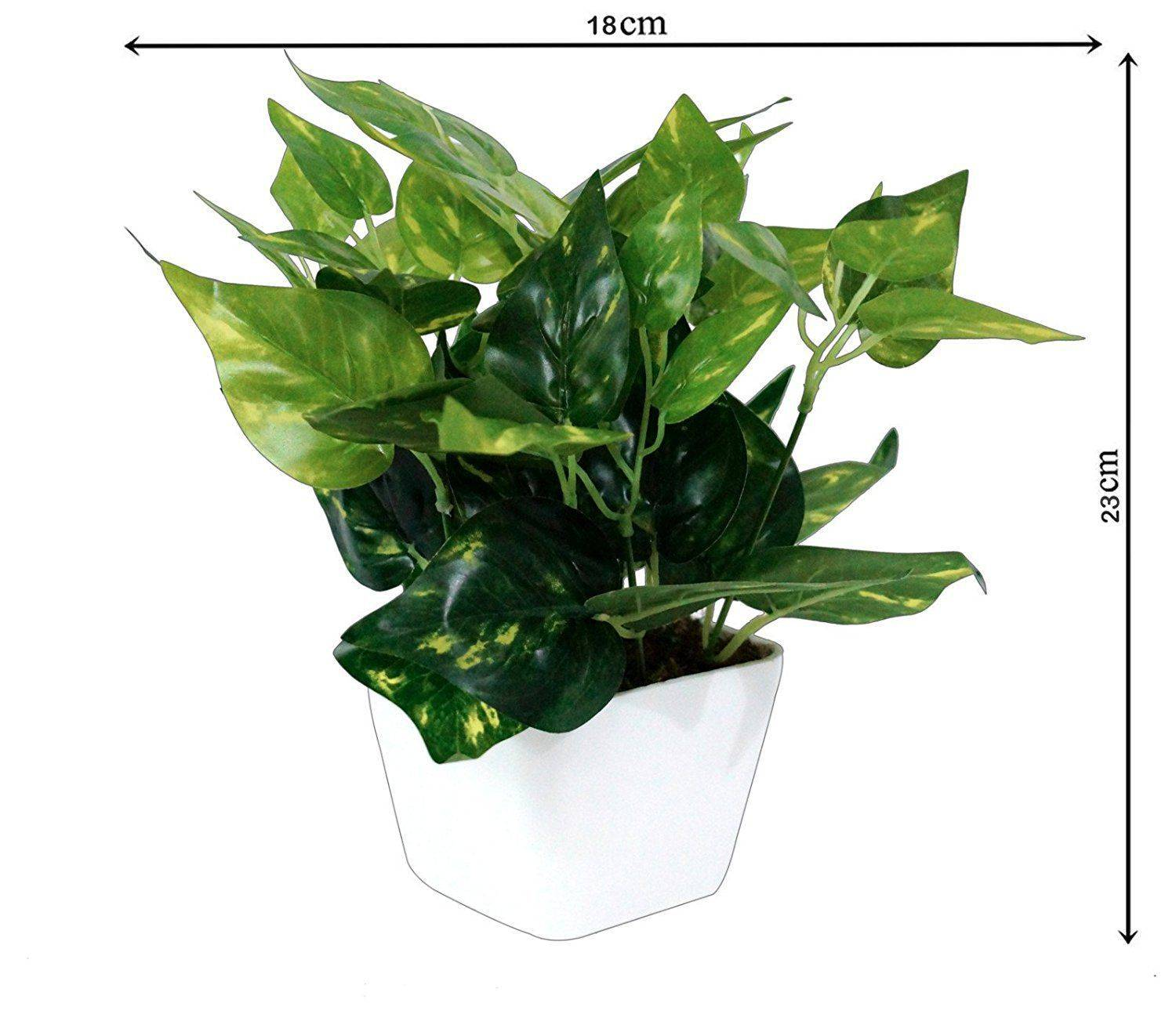YUTIRITI Miniature Money Plant Green SDL 2 71d6b