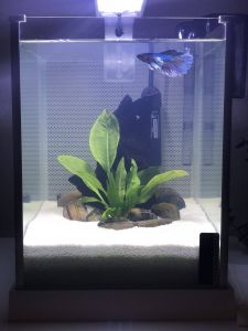 Contemporary Fish Tanks Best Of Gabby S Tank Was Upgraded White Sand and A Flourishing