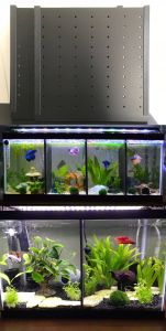 Contemporary Fish Tanks Fresh Aquariums and Tanks 20 Gallon Long Fish Tank Divider