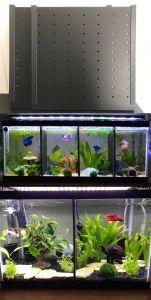 Contemporary Fish Tanks Inspirational Aquariums and Tanks 20 Gallon Long Fish Tank Divider