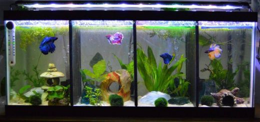 Contemporary Fish Tanks Inspirational Aquariums and Tanks 20 Gallon Long Fish Tank Divider