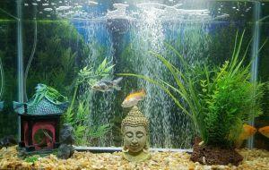 Contemporary Fish Tanks Lovely 🐠 Buddha Fish Tank 🐡