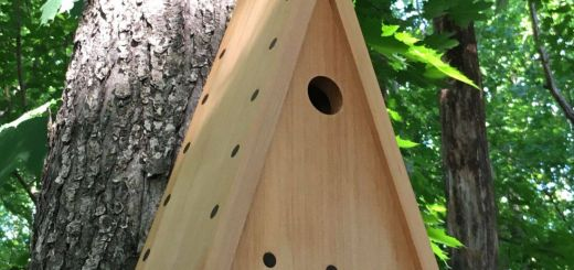 Decorative Outdoor Bird Houses Best Of Pin by Pleasant Ranch On Modern Birdhouses