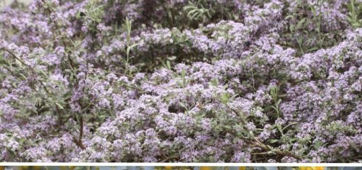 Garden Care Tips Beautiful 7 Show Stopping Flowering Shrubs for Your Garden