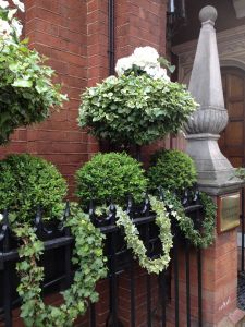 Garden Window Images Awesome Window Boxes In London Ivy Garland White Pansies Boxwoods