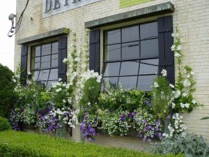 Garden Window Images Fresh Lavender and White Windowboxes Windowboxes