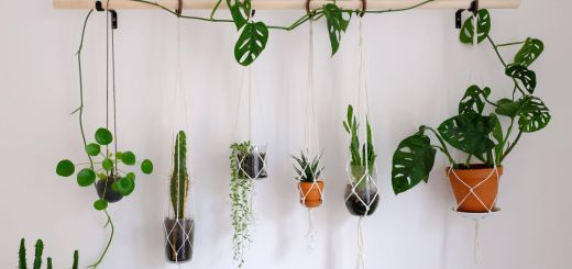 Hanging Indoor Plants Inspirational Diy Hanging Plant Wall with Macrame Planters