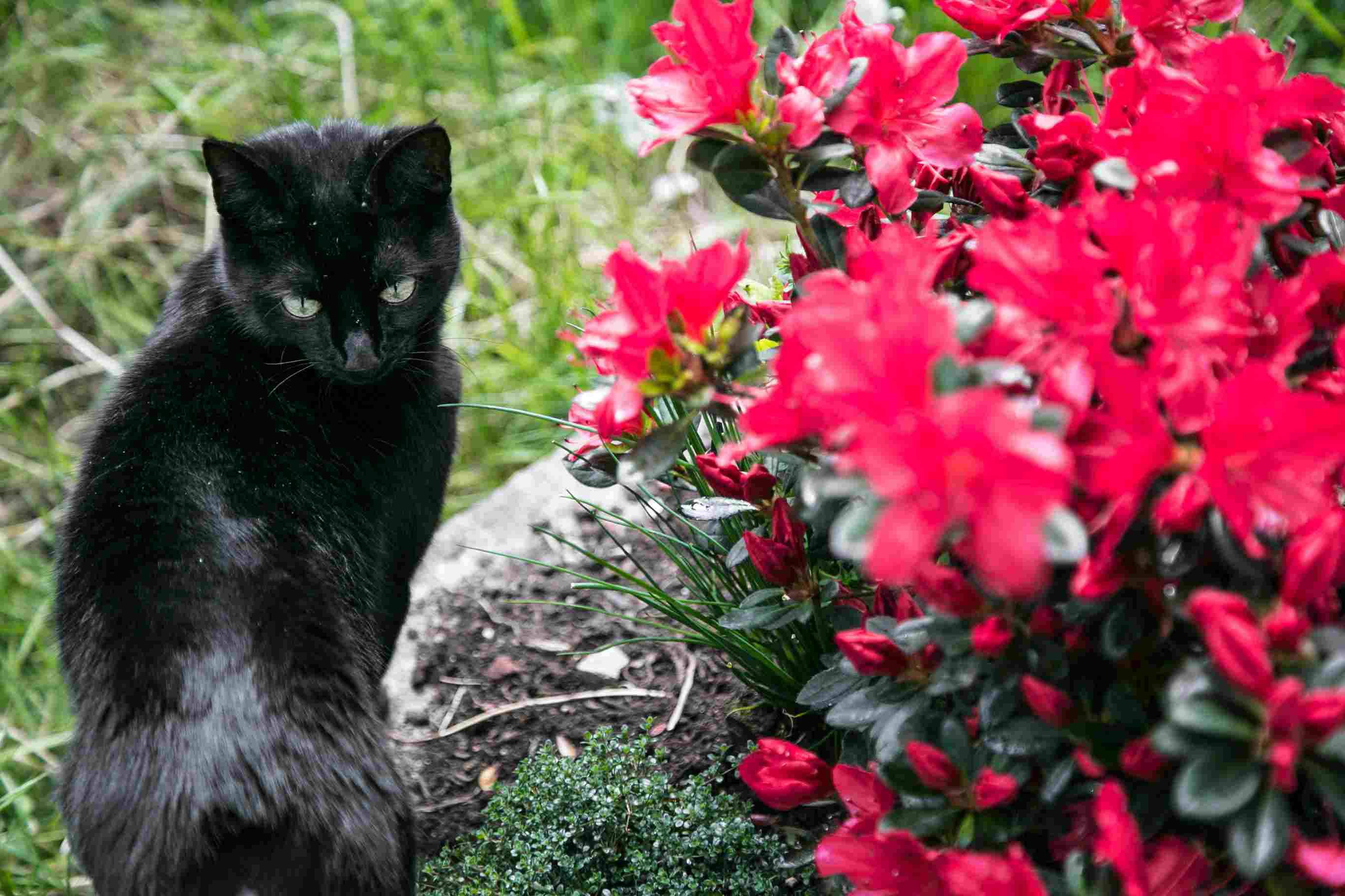 close up of black cat in garden 57dbf3a73df78c9cce7347a1