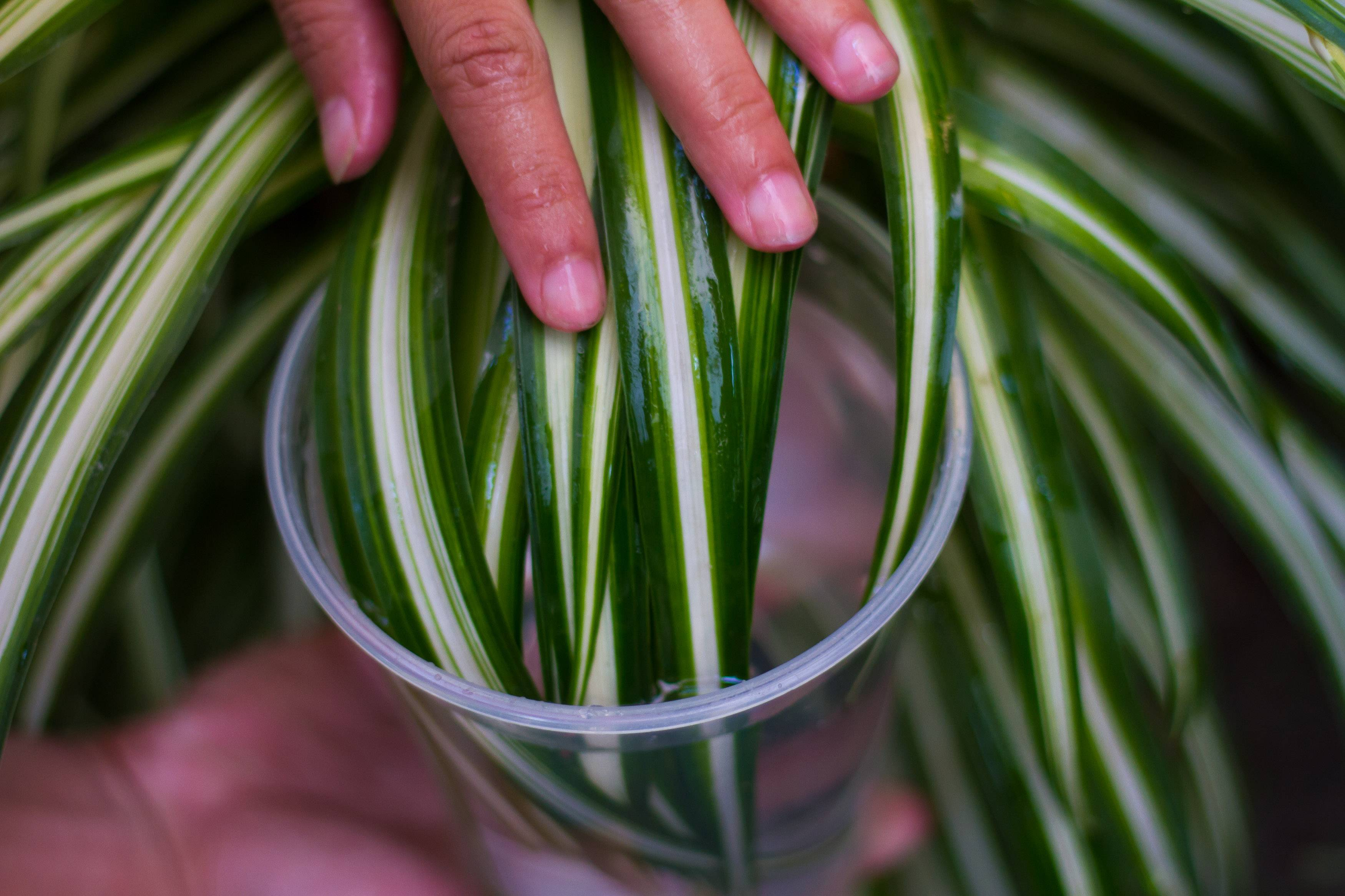 Clean Your Indoor Houseplants Step 4Bullet2