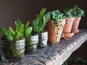 Indoor Plant Display Unique the 7 Best Houseplants for Beginners