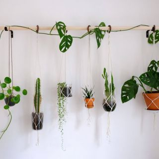 Indoor Wall Planters Elegant Diy Hanging Plant Wall with Macrame Planters