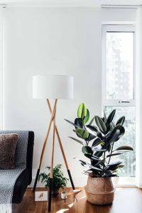 Interior Design Plants Inside House Elegant 11 Houseplants Ideas that Outsmart Winter Depression