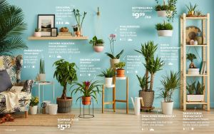 Interior Design Plants Inside House Fresh Living Indoors and Outdoors Guide Gardening In 2019