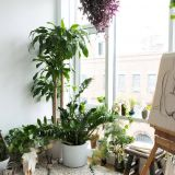 Interior Design Plants Inside House Inspirational How to Pick Houseplants Like A Designer