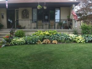 Landscaping Ideas Around House Luxury north Facing Garden Containing A Variety Of Hostas and Ferns