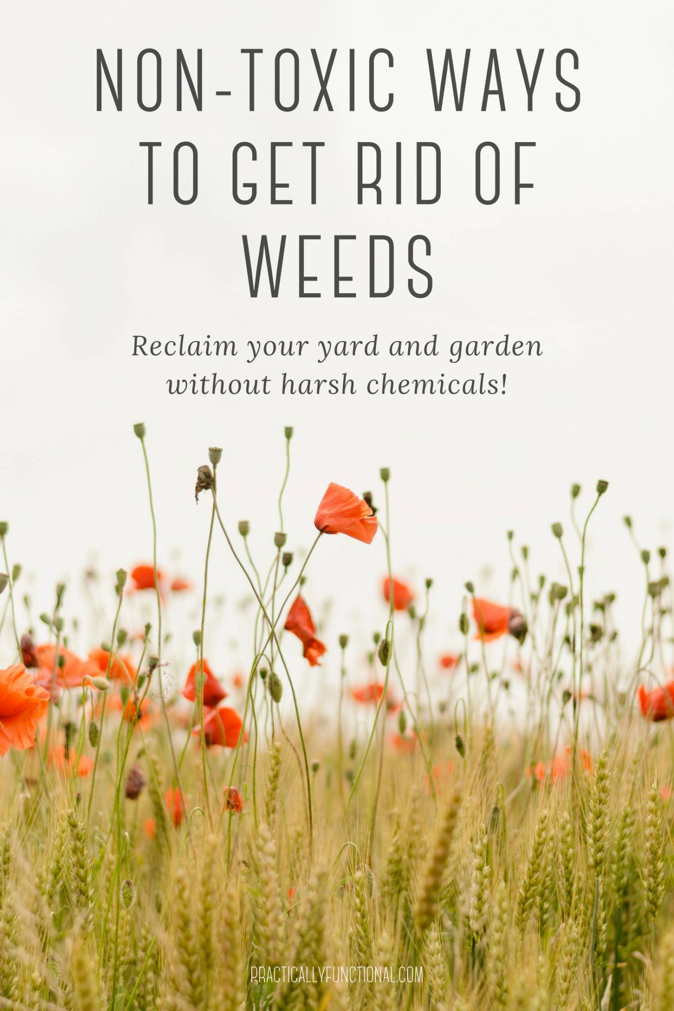 non toxic ways to rid of weeds 1