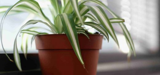 Non toxic House Plants for Cats Best Of Plants that are Safe for Pet Birds