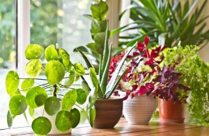 Non toxic House Plants for Cats New How to Get White Stuff F Houseplants Home Guides