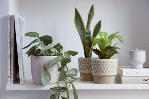 Non toxic House Plants for Cats Unique Winter Care Of Houseplants