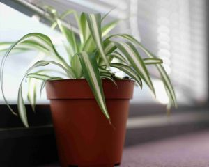 Non toxic House Plants Lovely Plants that are Safe for Pet Birds