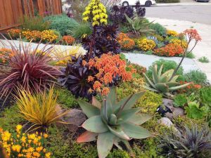 Succulent Landscape Design Inspirational Awesome Rock Landscaping Ideas Backyard that Work