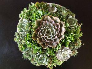 Succulent Landscape Design New Camille Beehler Landscape Design Petite Pots Succulent Style