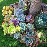 Succulent Landscape Design Unique Infinite Succulent Memory Succulent Garden