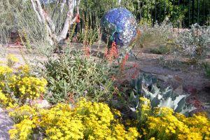 Xeriscaped Yard Luxury Habitat Garden Glendale Xeriscape Garden Glendale Az