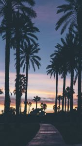 Palm Tree Wallpaper Awesome Downloaded From Wallpapers