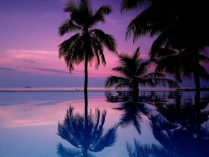 Palm Tree Wallpaper Best Of Pretty Sunset Palm Trees