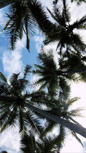 Palm Tree Wallpaper Lovely Pin by Madison Collins On iPhone Seasonal Lockscreens