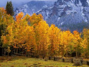 Aspen Tree Wallpaper Awesome Fall Colors Near Silver Jack Reservoir Colorado In 2020