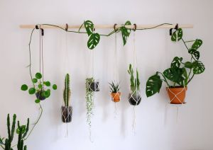 Remarkable Air Plant Wall Decor Elegant Diy Hanging Plant Wall with Macrame Planters