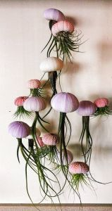 Remarkable Air Plant Wall Decor Unique Diy Indoor Air Plant Jellyfish Ideas
