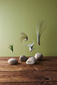 Remarkable Air Plant Wall Decor Unique the Rocks