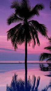 Picturesque Palm Tree Wall Decor Luxury Download Wallpaper 1080x1920 Palm Trees Night Silhouettes