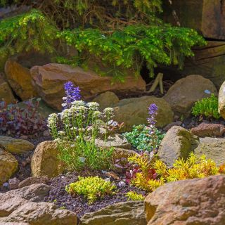 Best Of Rock Garden Best Of 20 Awesome Modern Rock Garden and Flower Decoration Ideas