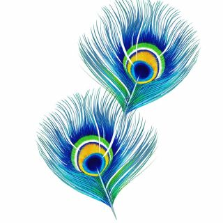 Peacock Feather Aj Luxury Peacock Feathers