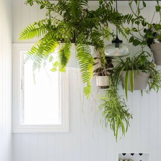 Inspirational Indoor Hanging Plants Unique Pin by Laurie On Houseplants